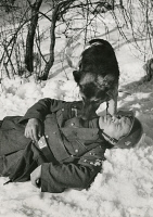 0409456 © Granger - Historical Picture ArchiveWWII: RESCUE DRILL, 1940.   A dog finds a wounded German soldier during a search and rescue training session, 1940. Full credit: DRK - ullstein bild / Granger, NYC -- All rights re