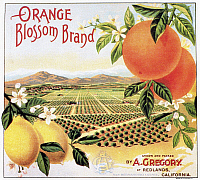 0090796 © Granger - Historical Picture ArchiveCRATE LABEL, 20th CENTURY.   Orange Blossom brand oranges from California.