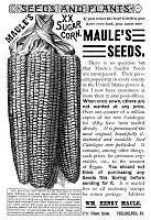 0323684 © Granger - Historical Picture ArchiveAD: SEEDS, 1889.   American magazine advertisement for Maule's corn seeds, 1889.