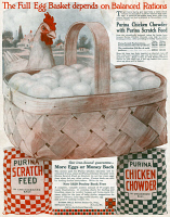 0409663 © Granger - Historical Picture ArchiveAD: PURINA, 1919.   American advertisement for Purina Chicken Chowder with Purina Scratch Feed, 1919.