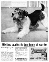 0433876 © Granger - Historical Picture ArchiveAD: DOG TREATS, 1959.   American advertisement for Milk Bone dog treats. Illustration, 1959.