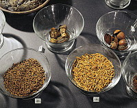 0278258 © Granger - Historical Picture ArchiveARCHAEOLOGY.   Egyptian civilization, New Kingdom, Dynasty XVIII. Fruits and pulses, about 1450 b.C. Detail with barley, corn and palm nuts. Full Credit: DEA / G. DAGLI ORTI / Granger, NYC -- All Rights Reserved.
