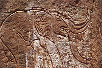 0282313 © Granger - Historical Picture ArchiveARCHAEOLOGY.   Libya - Sahara Desert - Fezzan. Rock art at Wadi Mathendush. Elephant. Full Credit: DEA / C. SAPPA / Granger, NYC -- All Rights Reserved.