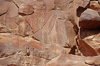 0282314 © Granger - Historical Picture ArchiveARCHAEOLOGY.   Libya - Sahara Desert - Fezzan - Wadi Mathendush archaeological site. Rock engravings depicting giraffes. Full Credit: DEA / C. SAPPA / Granger, NYC -- All rights re