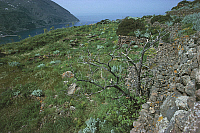 0320178 © Granger - Historical Picture ArchivePREHISTORIC ART.   Italy - Sicily Region - Eolie Islands, province of Messina - Filicudi Island - Ruins of the prehistoric village of Capo Graziano. Full Credit: DEA / G. ROLI / Granger, NYC -- All Rights Reserved.