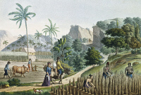 0339261 © Granger - Historical Picture ArchiveHISTORY.   Farmers at work, Guam Island, Mariana archipelago, engraving from a painting by Denis-Sebastien Leroy (active 1795, died 1832), from the Voyage around the world, 1817-1820, by Louis de Freycinet (1779-1842). Micronesia, 19th century. Full credit: De Agostini Picture Library / Granger, NYC -- All Rights Reserved.