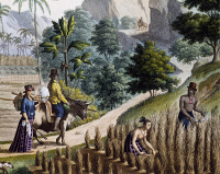 0339262 © Granger - Historical Picture ArchiveHISTORY.   Farmers at work, Guam Island, Mariana archipelago, engraving from a painting by Denis-Sebastien Leroy (active 1795, died 1832), from the Voyage around the world, 1817-1820, by Louis de Freycinet (1779-1842). Micronesia, 19th century. Full credit: De Agostini Picture Library / Granger, NYC -- All Rights Reserved.