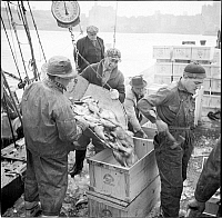 0172136 © Granger - Historical Picture ArchiveWATERFRONT, 1937.  Men unloading fish on the docks in New York City.