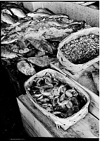 0172377 © Granger - Historical Picture ArchiveFULTON STREET FISH MARKET.   Crab, fish and frog legs at the market, New York City. Photograph, 1938.