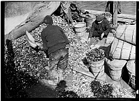 0172380 © Granger - Historical Picture ArchiveFULTON FISH MARKET, 1938.   Unloading mussels at the Fulton Fish Market, New York City. Photograph, 1938.