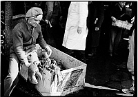 0172383 © Granger - Historical Picture ArchiveFULTON STREET MARKET, 1938.   Man with lobster at the Fulton Fish Market, New York City. Photograph, 1938.