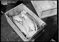 0172385 © Granger - Historical Picture ArchiveFULTON FISH MARKET, 1938.   Red snapper at the Fulton Fish Market, New York City. Photograph, 1938.