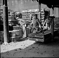 0172397 © Granger - Historical Picture ArchiveWEST WASHINGTON MARKET.   Poultry crates at the West Washington Market, New York City. Photograph, 1938.