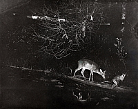 0245895 © Granger - Historical Picture ArchiveWHITEFISH LAKE, MICHIGAN, USA.   A deer and a porcupine balance on a log on the lake's shoreline. George Shiras.