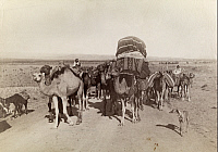 0246132 © Granger - Historical Picture ArchiveSAHARA DESERT, NORTH AFRICA.   Camels, heavily laden with packs, walk a desert road. David Fairchild.