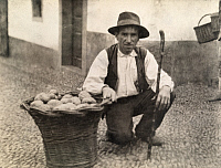 0246145 © Granger - Historical Picture ArchiveMADEIRA ISLANDS.   A man kneels next to a basket of the tropical fruit, anona. David G. Fairchild.