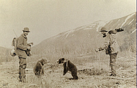 0246604 © Granger - Historical Picture ArchivePORT MOLLER, ALASKA, NORTH AMERICA.   Two bear cubs engage in play on the way down to camp. George Mixter Ii.