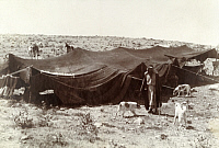 0246939 © Granger - Historical Picture ArchiveARABIA.   Dogs and horses forage near a Bedouin and his goat's hair tent. Archibald Forder.