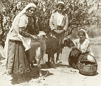 0247492 © Granger - Historical Picture ArchiveDAMASCUS, SYRIA.   Women and children feed sheep near a grove of trees. Archibald Forder.