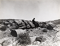 0247991 © Granger - Historical Picture ArchivePETRIFIED NATIONAL FOREST PARK, ARIZONA, USA.   A man sits on a large segment of petrified wood. George King.