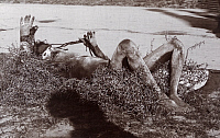 0248501 © Granger - Historical Picture ArchiveINDIA.   A sadhu lays on a bed of thorns to subdue temptations of the flesh. Raja Deen Dargal And Son.