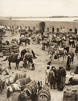 0248742 © Granger - Historical Picture ArchiveFELUJA, MESOPOTAMIA.   Men and horses congregate at the court of a caravanserai in Fallujah. Underwood And Underwood.