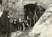 0249233 © Granger - Historical Picture ArchiveTHE ALPS, ITALY.   Italian World War I troops stand with their rescue dogs. Comando Supremo, Italian Army.