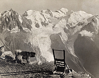 0249904 © Granger - Historical Picture ArchiveBREVENT, AIGUILLES ROUGES, FRANCE.   A dog looks at the glaciers of Mont Blanc from Brevent peak. Donald Mcleish.