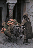 0250533 © Granger - Historical Picture ArchiveTUNISIA.   A carrot peddler walks his donkey to the market. Franklin Price Knott.