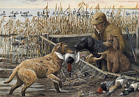 0250992 © Granger - Historical Picture ArchiveARTWORK.   A retriever brings a shot duck back to a hunter. Louis Agassiz Fuertes.