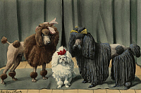 0250996 © Granger - Historical Picture ArchiveARTWORK.   Three types of poodles stand next to each other. Louis Agassiz Fuertes.