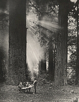 0251070 © Granger - Historical Picture ArchiveCALIFORNIA, USA.   Men view map against giant redwoods as sunbeams break through fog. Charles Willis Ward.