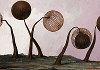 0253329 © Granger - Historical Picture ArchiveARTWORK.   Illustration of spherical spores with basket-like ribs and stays. William H. Crowder.