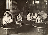 0253589 © Granger - Historical Picture ArchiveDAITOTEI, TAIWAN, JAPAN.   Women pick through tea on low stools in a Dadaocheng warehouse. Taiwan Gov'T Information Office.