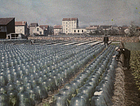 0254397 © Granger - Historical Picture ArchiveCHATILLION, ILE-DE-FRANCE, FRANCE.   Farmers cultivate the lettuce fields under glass in March. Gervais Courtellemont.