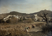 0254632 © Granger - Historical Picture ArchiveNEIGHBORHOOD OF CARPENTRAS, GIGONDAS, PROVENCE ALPES COTE D'AZUR, FRANCE.   An old fortress and village are visible behind women picking grapes. Gervais Courtellemont.