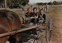 0255902 © Granger - Historical Picture ArchiveSONOMA, CALIFORNIA, USA.   Schoolchildren heading home from school in a horse-drawn carriage. B. Anthony Stewart.