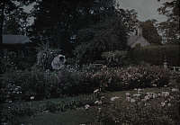 0256198 © Granger - Historical Picture ArchiveNEAR FREDERICKSBURG, VIRGINIA, USA.   A woman admires the flowers on an old estate garden in Fredericksburg. Clifton R. Adams.