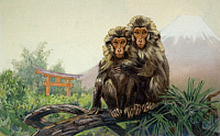 0256762 © Granger - Historical Picture ArchiveANIMALS.   Painting of a pair of Japanese macaques with Mount Fuji in distance. Elie Cheverlange.
