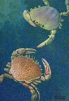 0256976 © Granger - Historical Picture ArchiveARTWORK.   Two swimming crabs. William H. Crowder.