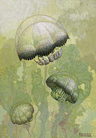 0257021 © Granger - Historical Picture ArchiveARTWORK.   Painting of several Stomolophus meleagris jellyfish. William H. Crowder.