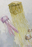 0257022 © Granger - Historical Picture ArchiveARTWORK.   Painting of three species of jellyfish floating together. William H. Crowder.