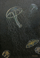 0257026 © Granger - Historical Picture ArchiveARTWORK.   A painting of two species of deep water jellyfish. William H. Crowder.
