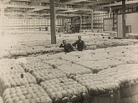 0257366 © Granger - Historical Picture ArchiveNEW ZEALAND.   Two men stand among hemp in a New Zealand manufacturing warehouse. Paul Thompson.