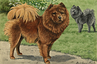 0258092 © Granger - Historical Picture ArchiveARTWORK.   A brown and black chow. Louis Agassiz Fuertes.
