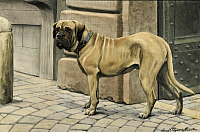 0258095 © Granger - Historical Picture ArchiveARTWORK.   A mastiff guards a house. Louis Agassiz Fuertes.