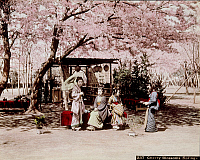 0075946 © Granger - Historical Picture ArchiveJAPAN: CHERRY BLOSSOMS.   Women sitting under a cherry tree in full bloom. Hand-tinted albumen photograph by Farsari & Co., 1885-1900.