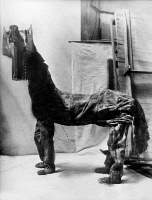 0087704 © Granger - Historical Picture ArchivePICASSO: HORSE COSTUME.   Horse costume designed by Pablo Picasso for the ballet 'Parade,' which was performed by the Ballet Russes with music by Erik Satie in 1917.