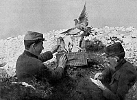 0129660 © Granger - Historical Picture ArchiveWORLD WAR I: PIGEONS.   Soldiers releasing homing pigeons during World War I.