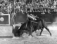 0140658 © Granger - Historical Picture ArchiveEL CORDOBES.   spanish toreador Manuel Benitez called El Cordobes during bullfight in Frejus France july 22, 1968 taureau bull. Full credit: AGIP - Rue des Archives / Granger, NYC -- All Rights Reserved.